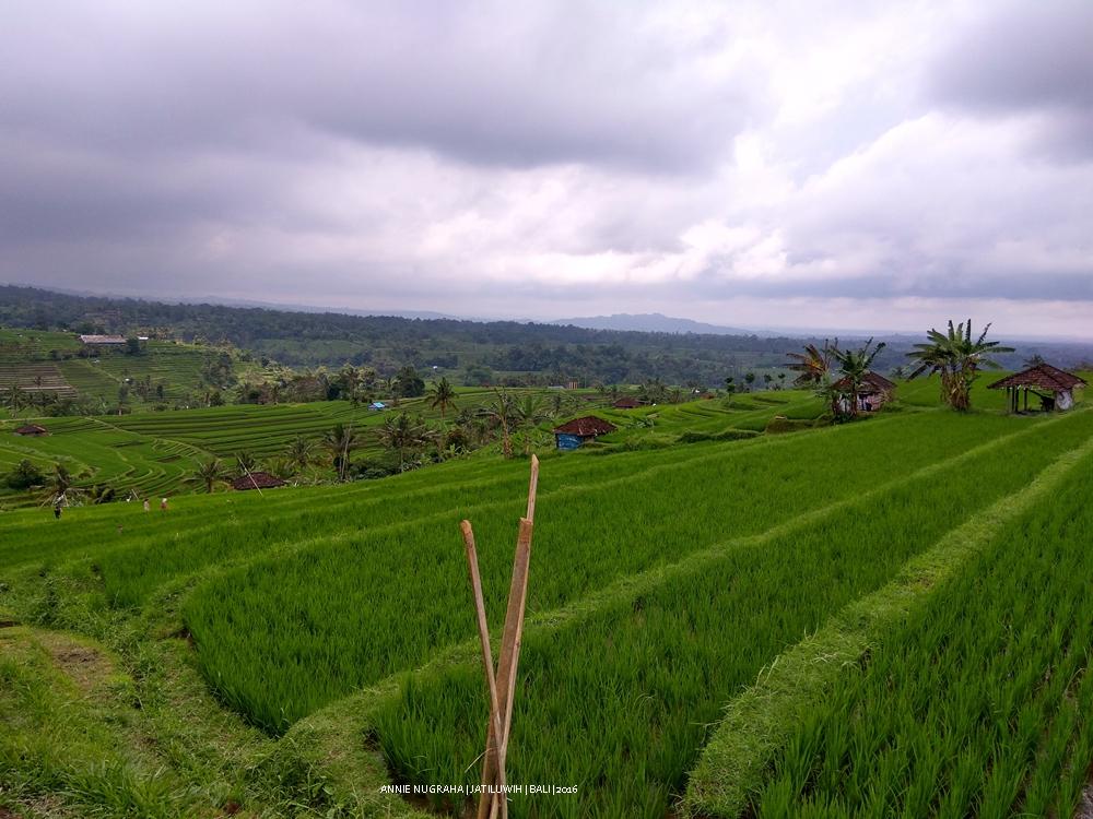 JATILUWIH. UNESCO World Heritage di Tabanan BALI