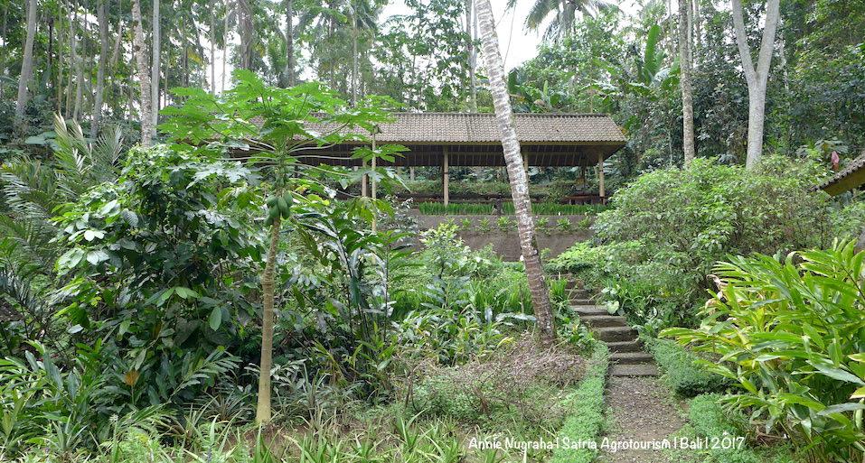 Berwisata AGRO di Bali | Mendekat ke Alam dan Mencintai Bumi