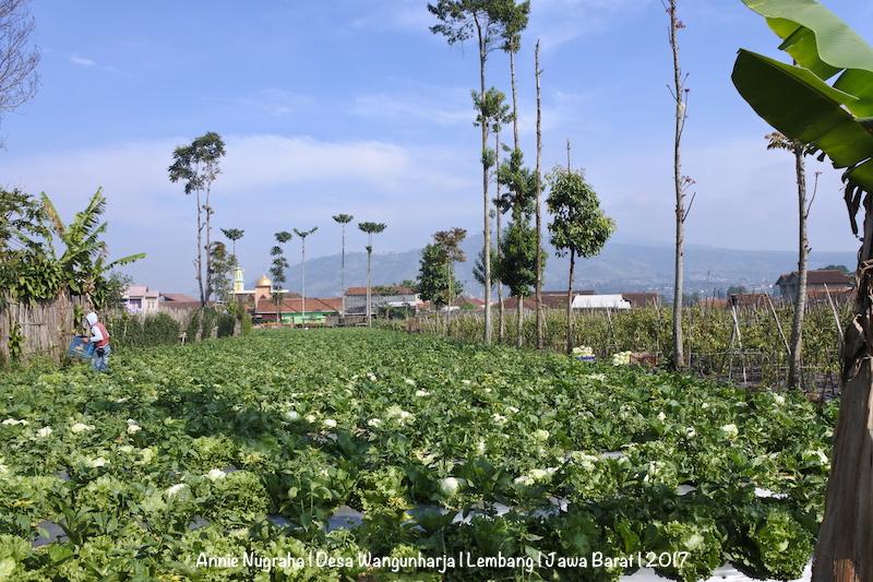 Menyegarkan Mata Hati di Desa WANGUNHARJA, Lembang, Jawa Barat